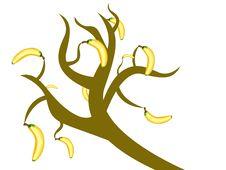 Free Banana Tree Stock Image - 6101351