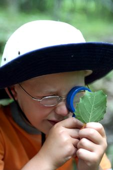 Free Young Boy Studying Leaf Stock Photo - 6101720