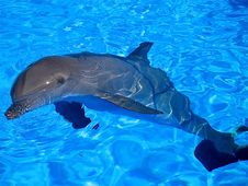 Free Dolphin Bathing In A Swimming Pool Royalty Free Stock Photography - 6102057
