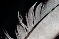 Free Feather Stock Photos - 6102363