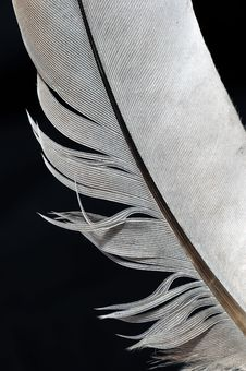 Free Feather Stock Image - 6102511