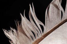 Free Feather Royalty Free Stock Photos - 6102538