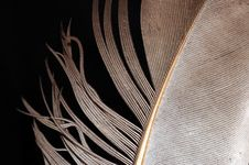 Free Feather Stock Image - 6102711
