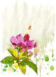 Free Hibiscus  Watercolor Flower Stock Images - 6102824