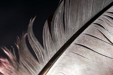 Free Feather Royalty Free Stock Photo - 6102985