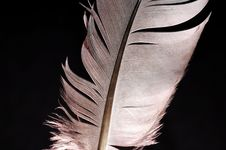 Free Feather Royalty Free Stock Photography - 6103067