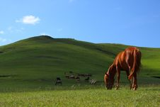Free Horse Grazing Royalty Free Stock Photography - 6103597