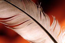 Free Feather Stock Photos - 6103793