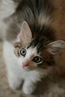 Free Kitten Stock Image - 6104041