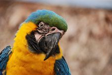 Free Yellow Parrot Royalty Free Stock Photography - 6108747
