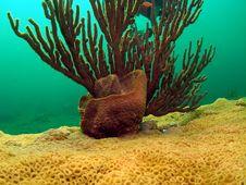 Barrel Sponge And Spiny Sea Rod