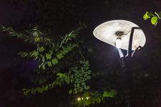 Street Lamp At Night Royalty Free Stock Photos