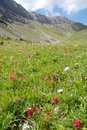 Free Mountains And Alpine Meadow Royalty Free Stock Photos - 6110918