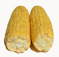 Free Two Corn Cob. Stock Photos - 6113123