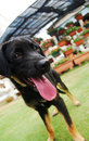 Free A Black Puppy Royalty Free Stock Photo - 6117195