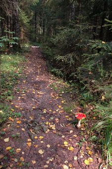 Free Path In The Woods Royalty Free Stock Photos - 6111258