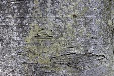 Free Weathered Bark Of Tree Stock Images - 6111844
