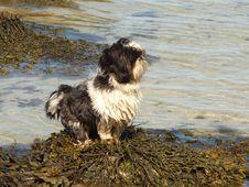 Free Dog On Lofoten S Weed Royalty Free Stock Photo - 6112055