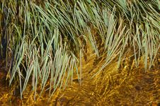 Free Grass In Water Stock Images - 6112224