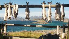 Free Lofoten S Stockfish Royalty Free Stock Image - 6112256