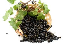 Free Blackcurrant Royalty Free Stock Photography - 6112537