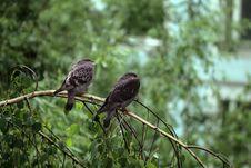 Free Doves Under Rain Stock Photography - 6112902