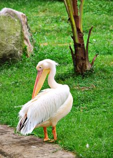 Free Yellow Billed Stork Stock Photography - 6113082