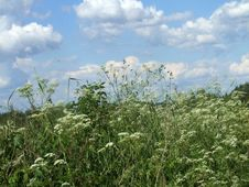 Free Spring Meadow Stock Images - 6113094