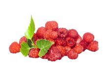 Free Raspberries Royalty Free Stock Image - 6113566