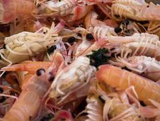 Free Scampi 1 Stock Image - 6115381