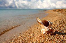 Free Seashell On The Sea Coast Stock Photos - 6115743