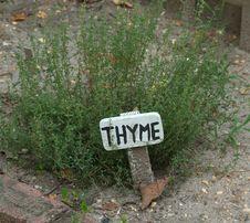 Free Thymus Vulgaris Royalty Free Stock Photography - 6116087