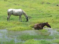 Free Horse Taking A Bathe Stock Images - 6116114