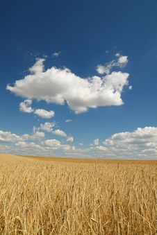 Free Golden Wheat Field Over Blue Sky Stock Photos - 6116423