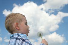 Free Boy Blowing Dandelion Royalty Free Stock Image - 6116426