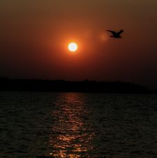 Free A Pelican Sunset Stock Photography - 6116852
