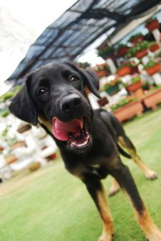 Free A Black Puppy Royalty Free Stock Photos - 6117218