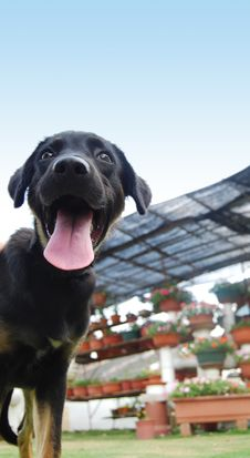 Free A Black Puppy Stock Photography - 6117222