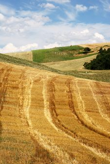 Free Lines In A Field Of Straw Stock Images - 6117554