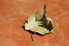 Free Leaf On The Tiles. Stock Photography - 6117662