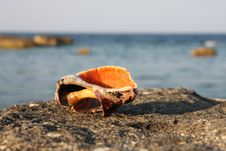Free Shell On The Coast. Royalty Free Stock Images - 6118749