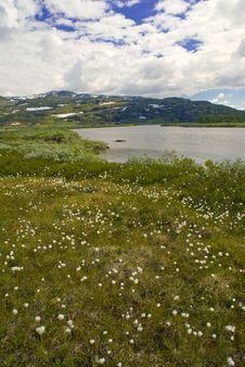 Free Mountain Meadow Stock Photos - 6119203