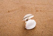 Free Opened Sea Shell On Beach Sand Stock Image - 6119881