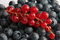 Free Black And Red Currant Stock Photo - 6124770