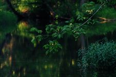 Free Oasis Of Peace Stock Photos - 6120193