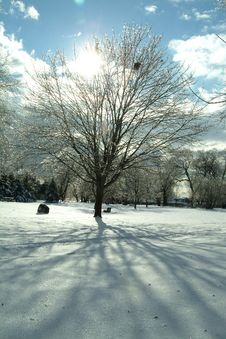 Free Wintery Tree Stock Photo - 6120380