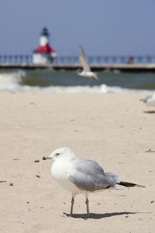 Free Seagull With Lighthouse In Background Stock Photo - 6120650