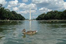 Free Washington Monument Stock Photo - 6120810