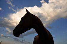 Free Equine Profiles Stock Photography - 6120902