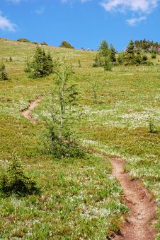 Free Hiking Trail And Meadow Royalty Free Stock Photography - 6120967
